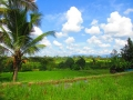 Ubud Bali (108)