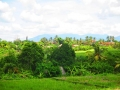 Ubud Bali (109)