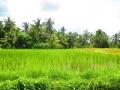 Ubud Bali (110)