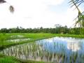 Ubud Bali (111)