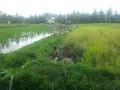 Ubud Bali (12)