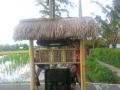 Ubud Bali (13)