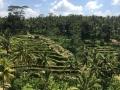 Ubud Bali (64)