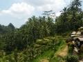 Ubud Bali (97)