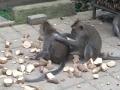 Ubud Monkey Forest (3)
