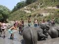 Elefantes Chiang Mai (12)