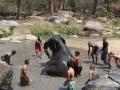 Elefantes Chiang Mai (8)
