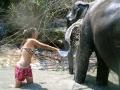 Elefantes Chiang Mai (91)