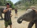 Elefantes Chiang Mai (74)