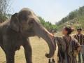 Elefantes Chiang Mai (78)