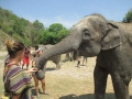 Elefantes Chiang Mai (79)