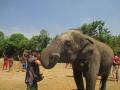Elefantes Chiang Mai (82)