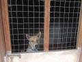 Lassie-Animal-Shelter-de-Langkawi-4