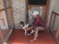 Lassie-Animal-Shelter-de-Langkawi-5
