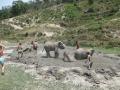 Elefantes Chiang Mai (33)