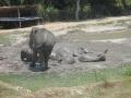 Elefantes Chiang Mai (40)