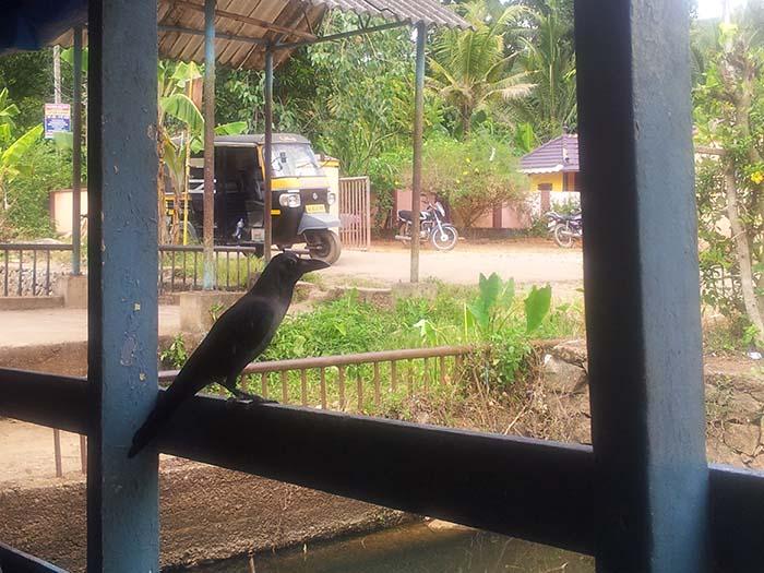 Backwaters-Alleppey-en-Kerala-48