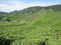 Qué-hacer-en-Cameron-Highlands-de-Malasia-2
