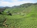 Qué-hacer-en-Cameron-Highlands-de-Malasia-22