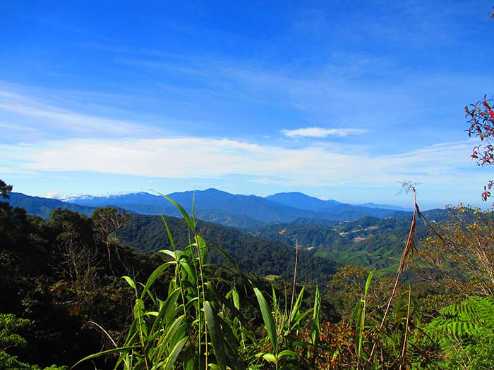 Qué-hacer-en-Cameron-Highlands-de-Malasia-13