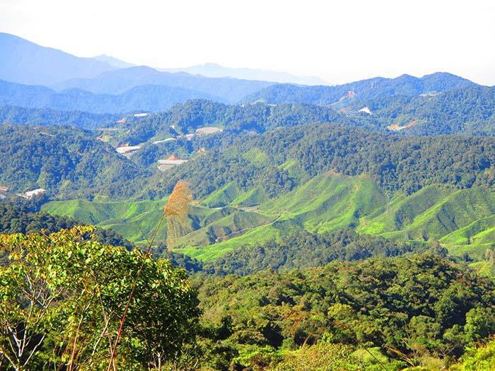 Qué-hacer-en-Cameron-Highlands-de-Malasia-14