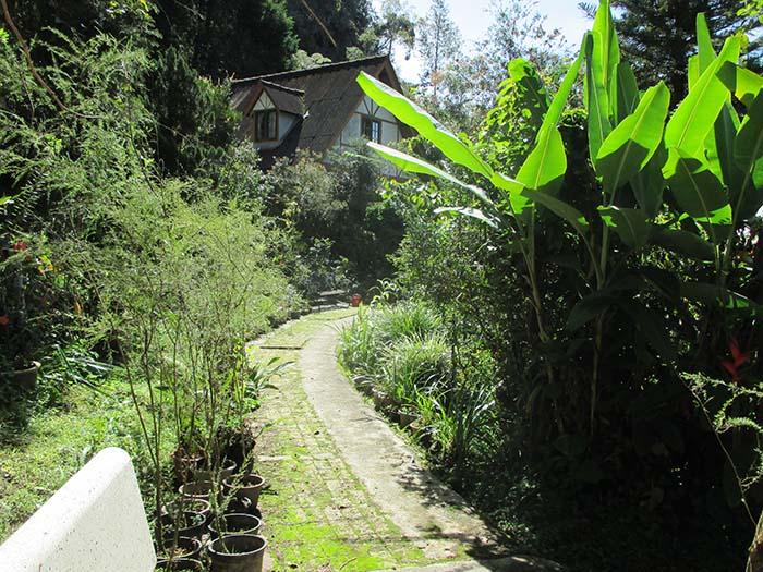 Qué-hacer-en-Cameron-Highlands-de-Malasia-18