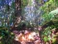 Qué-hacer-en-Cameron-Highlands-de-Malasia-12