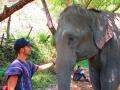 Elefantes Chiang Mai (46)