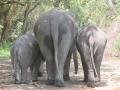 Elefantes Chiang Mai (49)