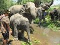 Elefantes Chiang Mai (50)