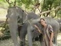 Elefantes Chiang Mai (61)