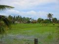 Soluna-Guest-House-Viviendoporelmundo-en-Langkawi-15
