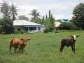 Soluna-Guest-House-Viviendoporelmundo-en-Langkawi-45