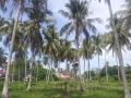 Soluna-Guest-House-Viviendoporelmundo-en-Langkawi-8