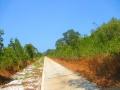 Koh-Phra-Thong-297