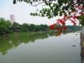 chiang mai (142)